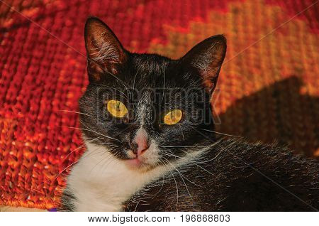 Close-up of cat's muzzle at sunrise in Paraty, an amazing and historic town totally preserved in the coast of the Rio de Janeiro State, southwestern Brazil. Retouched photo