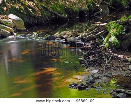 Long Exposure Magic Forest Stream With Moss Stones Grass Leafs And Grass