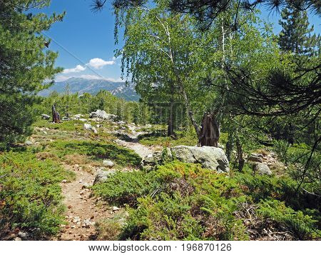 Footpath In The Birch And Pine Forest With Rock And Mountains