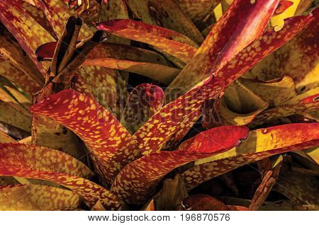Close-up of colorful plant leaves in the sand on sunny day in Paraty Mirim, a tropical beach near Paraty, an amazing and historic town in the coast of the Rio de Janeiro State, southwestern Brazil.