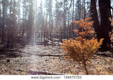 Forest Fire Aftermath With Sunlight