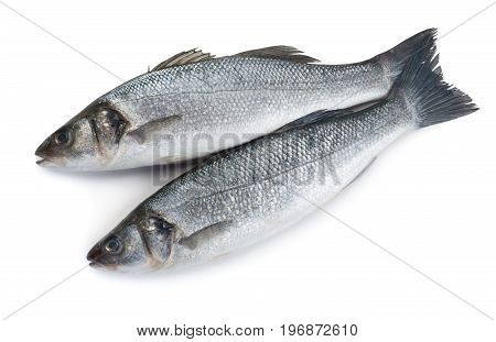 Two raw sea bass fishes isolated on white background