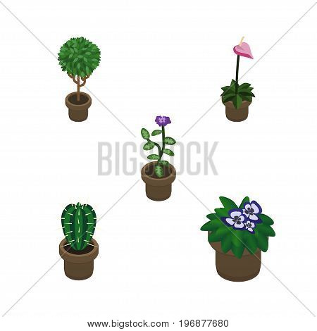 Isometric Houseplant Set Of Peyote, Flower, Flowerpot And Other Vector Objects