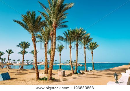 Palm trees on the beautiful beach in Egypt on the Red Sea.