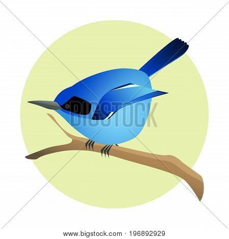 Colorful blue bird on a branch. Side profile. Exotic fauna.