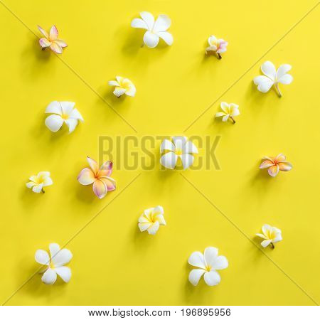Scattered White Pink Frangipani Yellow Background