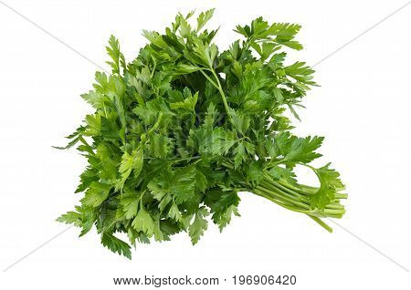 Bunches Of Parsley Isolated On White
