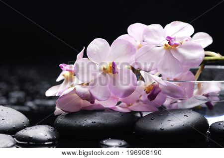 still life with pebbles and branch orchid