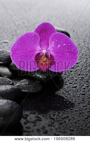 still life with red orchid and wet stones