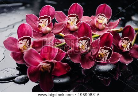 still life with pebbles and branch red orchid