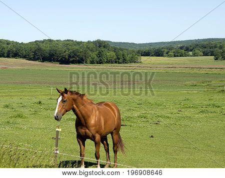 A single horse in a pasture on a Wisconsin farm.
