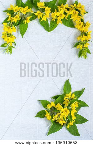 Festive flower arrangement. Flowers loosestrife (lysimachia) in yellow packing on blue textured background. Vertical top view flat lay