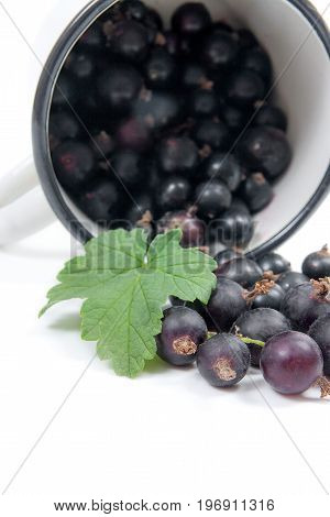White Cup With Black Currant Berry In It And Small Bunch Of Black Currant With Green Leaf Isolated O