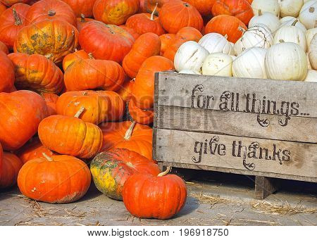 white and orange pumpkin at the market with inspirational Thanksgiving text on wooden box