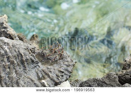 Small crab on rock at sea resort