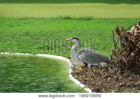 Exotic bird near artificial pond in green park