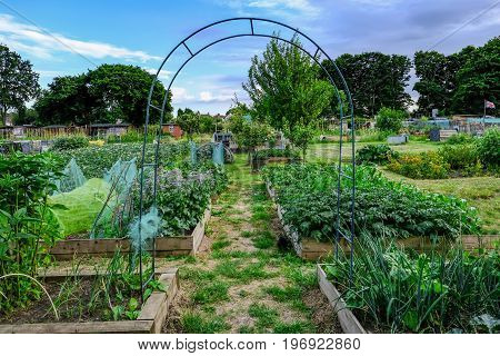 Allotment plot in early summer with crops growing in neat boxes. Shows and arch framing the view of the allotment.