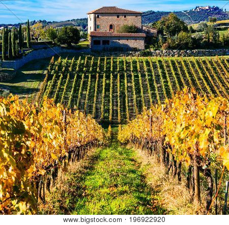 Traditional Tuscany - scenery with autumn vineyards. Italy