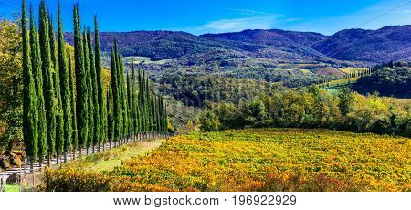 Traditional Tuscany - scenery with autumn vineyards and cypresses. Italy