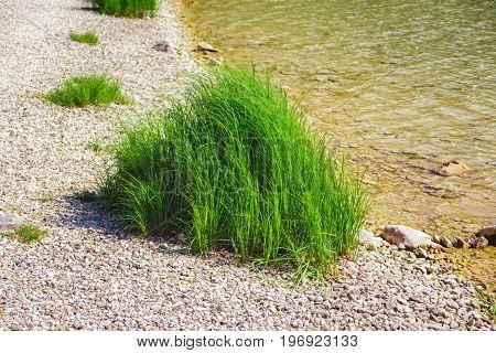 green grass among the rocks on the lake shore