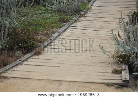 Up close image of footpath made of recycled material surrounded by native foilage at Asilomar State Beach in Pacific Grove, California.