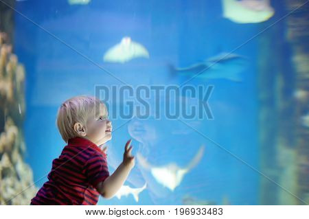 Happy toddler boy watches fishes in aquarium