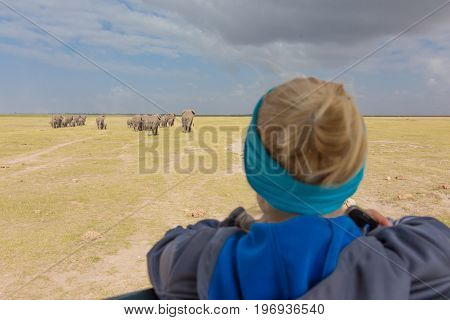 Woman on african wildlife safari, Amboseli national park, Kenya. Lady watching herd of wild african elephants. Open roof safari vehicle. Focus on elephants.