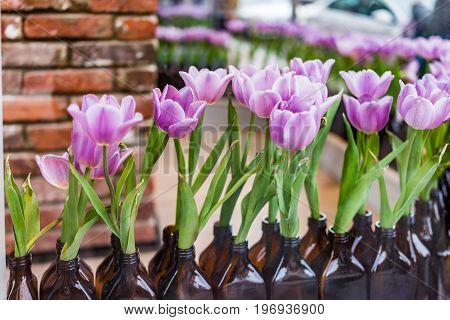 Purple Tulips In Dark Glass Bottles Window Store Decoration Closeup
