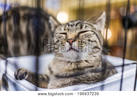 One Tabby Cat With Closed Eyes Behind Bars In Cage