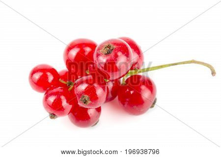 Red currant berries isolated on white background.