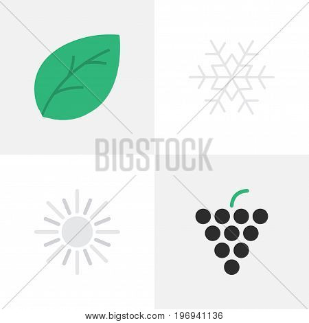 Elements Wine, Sun, Sheet And Other Synonyms Flake, Sheet And Sunny.  Vector Illustration Set Of Simple Gardening Icons.