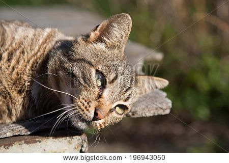 Concept relaxation beautiful cat lookig around background