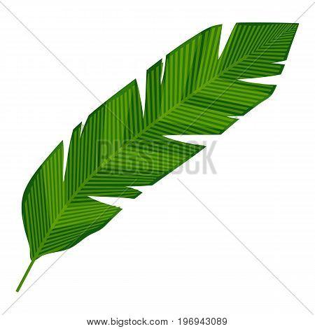 Banana, leaf icon. Cartoon illustration of banana leaf vector icon for web on white background