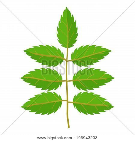 Rowan leaf icon. Cartoon illustration of rowan leaf vector icon for web on white background