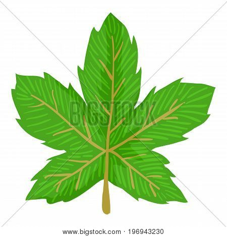 Maple leaf icon. Cartoon illustration of maple leaf vector icon for web on white background