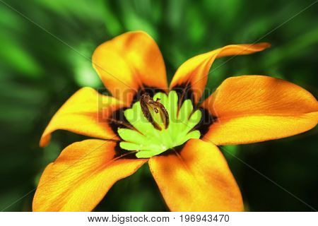 Orange Flower In Sphere High Quality Stock Photo
