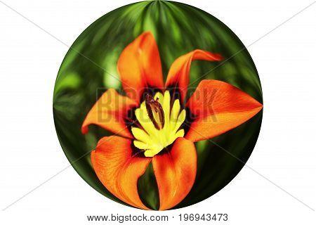 Orange Flower In Sphere High Quality Stock Photo