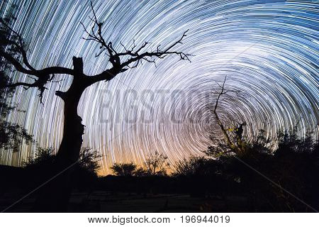 Trees Silhouette And Star Trails Movement At Night