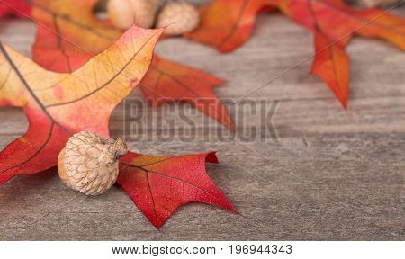 Colorful oak leaves and acorns on a wooden surface