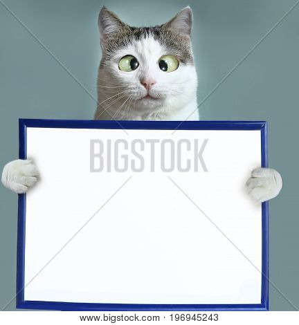 cat hold blank empty paper sheet in frame close up squint funny photo