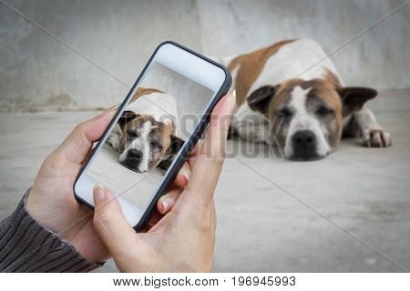 woman hand holding and using mobilecell phonesmart phone photography and a stray dog on concrete floor with blurred a stray dog on concrete floor.