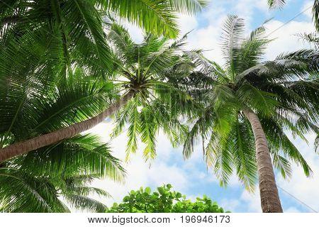 Tropical coconut palms against blue sky