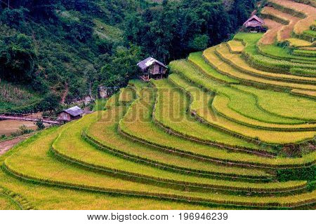 The rice terrace and some small huts in the ladder