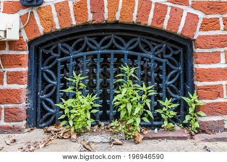 Basement Window Outside In Downtown Harrisburg, Pennsylvania With Brick Wall And Green Small Plants