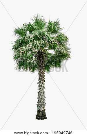 tree isolated  white background green wood nature