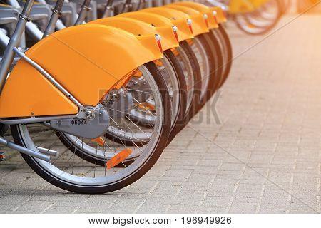 Rental bicycles close-up. Rear wheels of rental bicycles standing in row. Rental bicycles in Amsterdam.