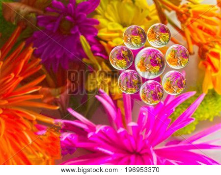 PHOTO IMAGE OF FLOWERS REFLECTED AND  REFRACTION