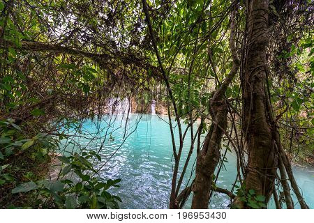 Twigs and waterfall at Kuang Si Falls in Laos.