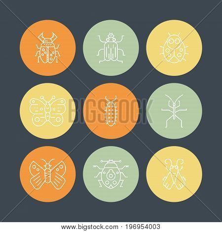 Collection of insects made in thin line vector style. Bug symbols, nature elements.