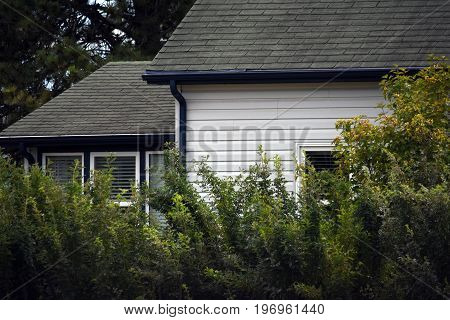 An abstract image of the exterior of an old house surrounded by shrubbery.